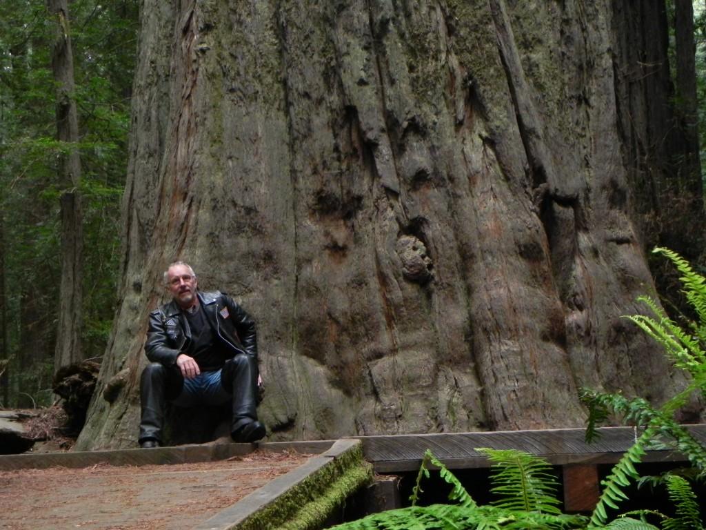 16 - Big Tree